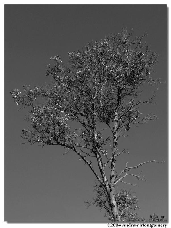black white nature1